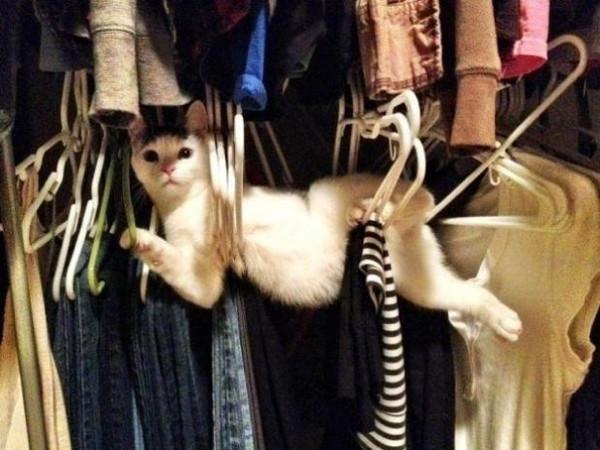 Tüm zamanların en iyi kedi fotoğrafları