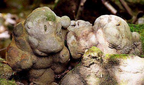 Bu taşlar büyüyor