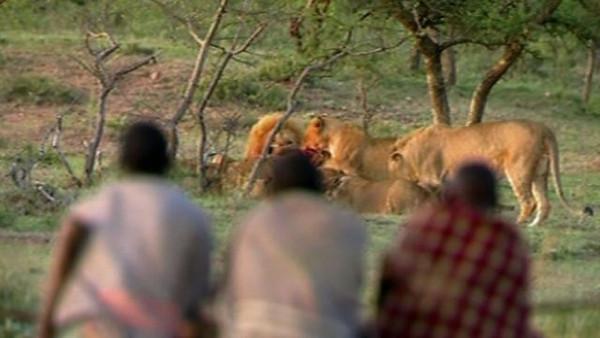 Aslan savaşçıları