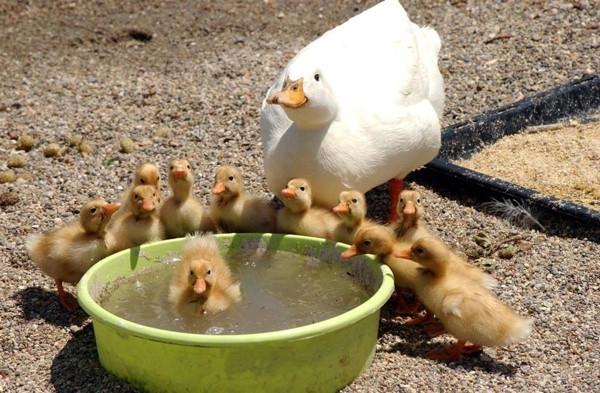 Anneler ve yavruları...