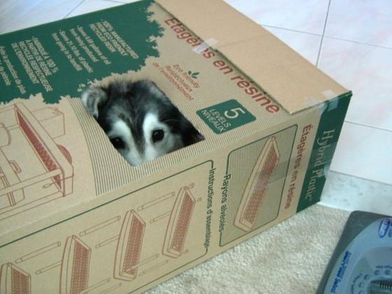 Kedilerin yetiştirdiği köpek