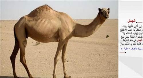 Kur'an'da adı geçen hayvanlar