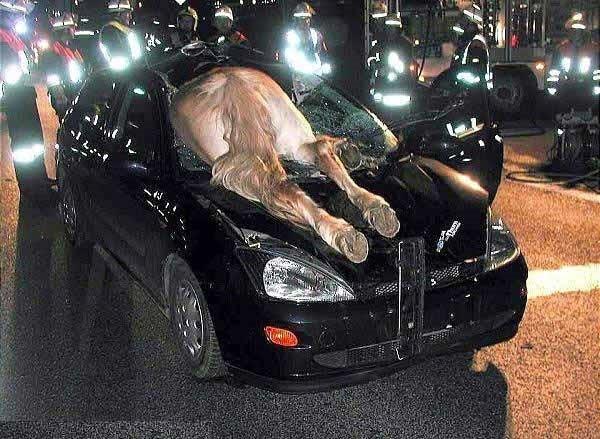 Sıradışı trafik kazaları