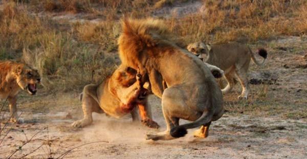 Kralların ölümcül savaşı