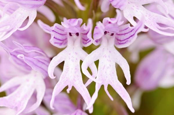 Tuhaf çiçekler