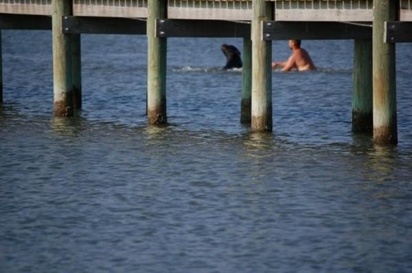 Denize ortasında 170 kiloluk ayı ile...