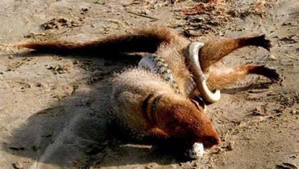 Vahşi doğanın acımasızlığı