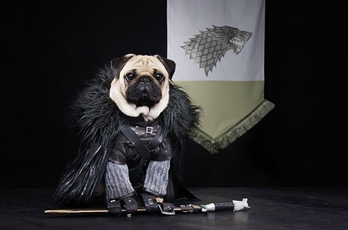 Sevimli köpekler Game of Thrones karakteri olursa