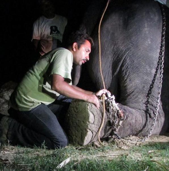 Ağlayan filin hikayesi