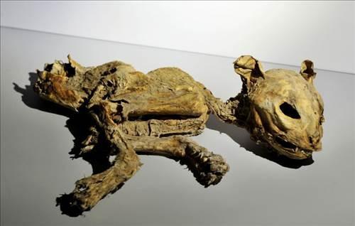 Binlerce yıllık mumyalar Aksaray Müzesi'nde