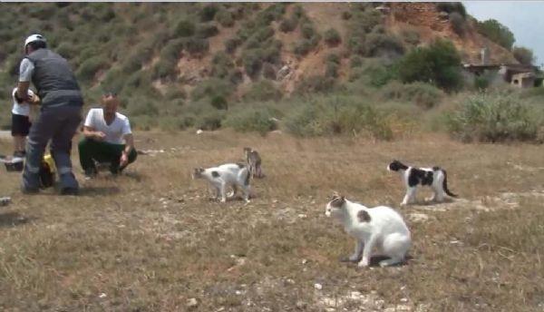 Sivriada'daki kedilerin imdadına yetiştiler