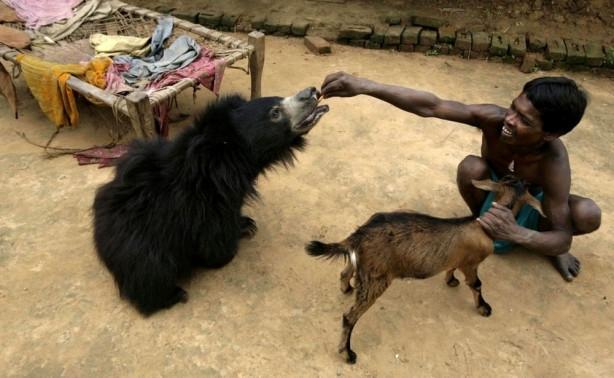 Sıradışı evcil hayvanlar