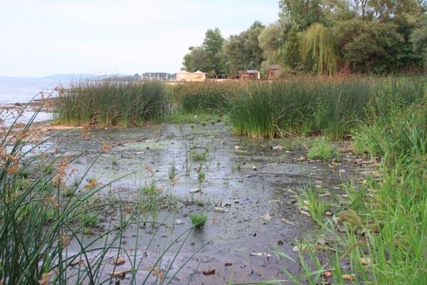 Sapanca Gölü'nde tehlike çanları