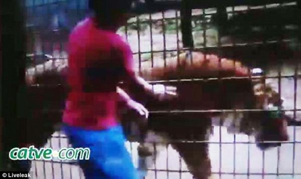 Hayvanat bahçesinde dehşet