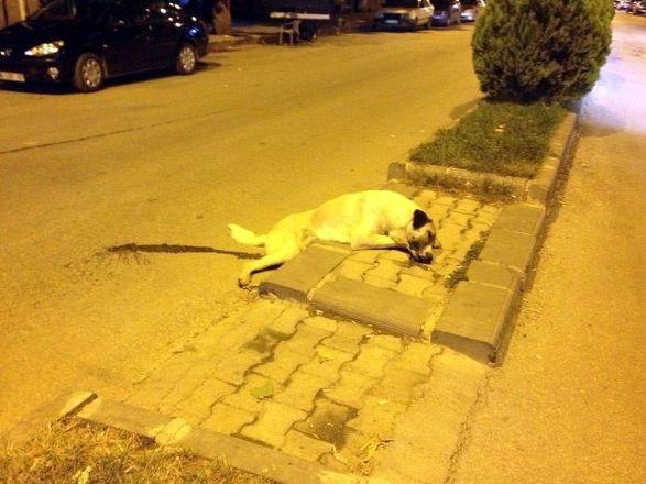 Köpekleri iğneyle katledip çöp arabasına attılar