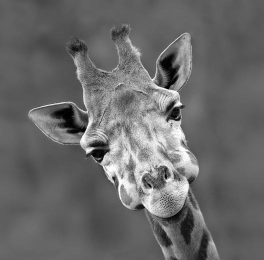 Vahşi doğanın sevimli yüzü