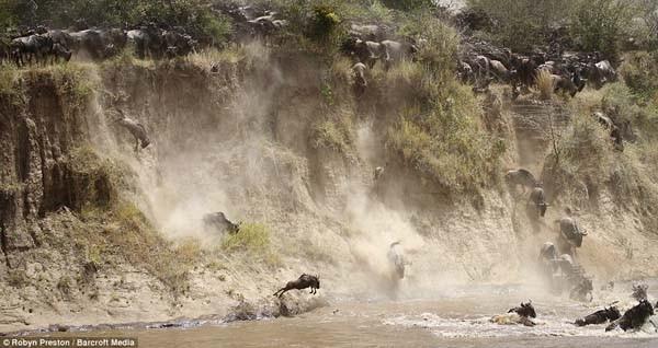 Nehrin ortasında ölüm kalım savaşı