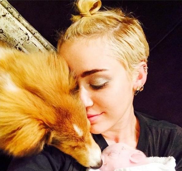 Çılgın şarkıcı Miley Cyrus yavru domuz besliyor