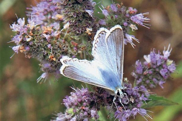 Saimbeyli değil sanki kelebekler vadisi!