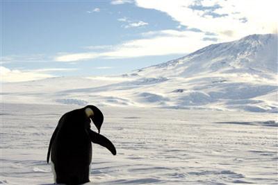 Buzlar dünyasının nesli tükenen sahipleri