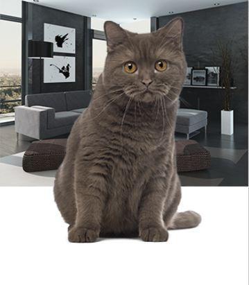 Mortgage alana kedi hediye