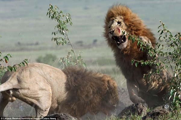 Kralların ölümüne üstünlük savaşı