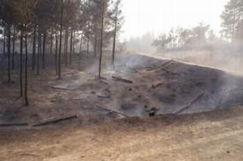 Orman yangını bir köyü yok etti