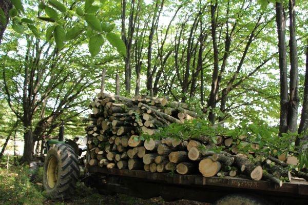 Kampüste tepki çeken ağaç kesimi