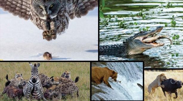 İnanılmaz av fotoğrafları