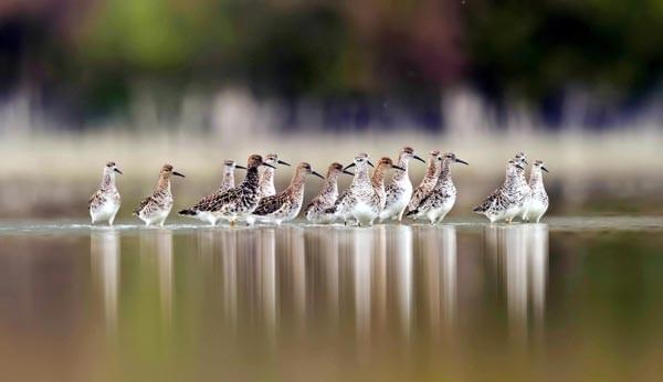 Burdur Gölü için 1 milyon kişi seferber oldu
