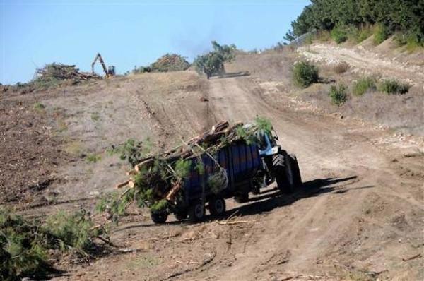 Çanakkale'nin en güzel ormanı odun için kesildi