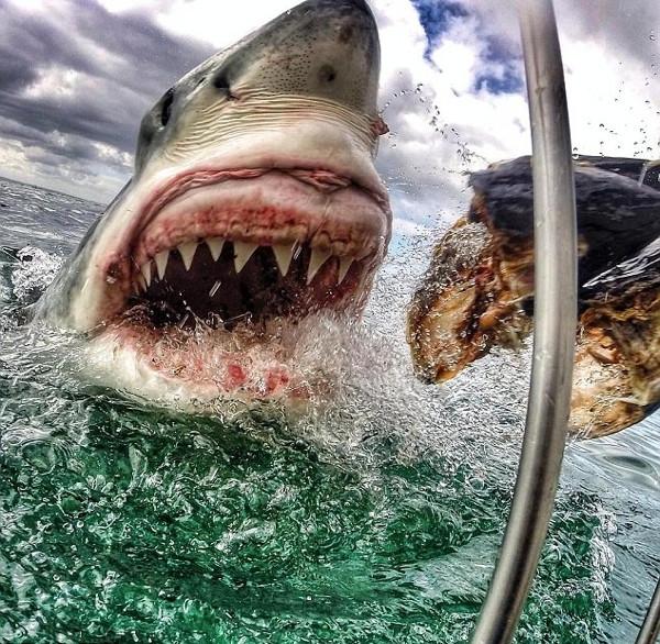Köpekbalığı ile hatıra fotoğrafı