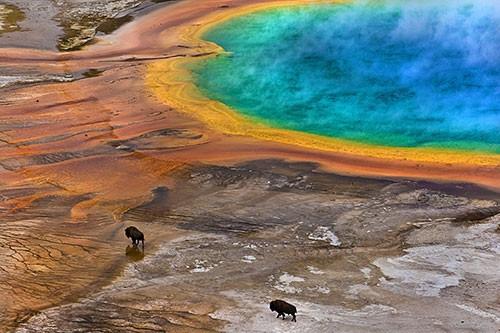 Yılın en iyi biyoloji fotoğrafları