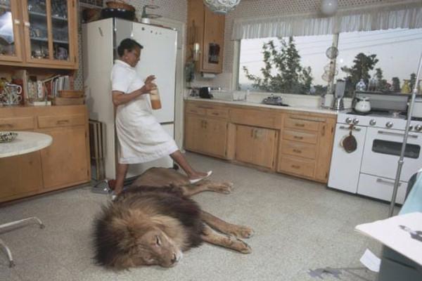 Aslanlar ile aynı evde...