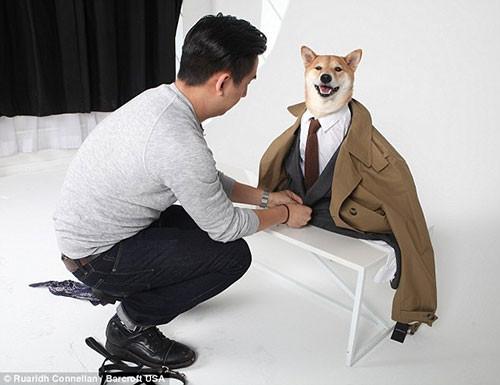 Bodhi isimli köpek ayda 15 bin dolar kazanıyor