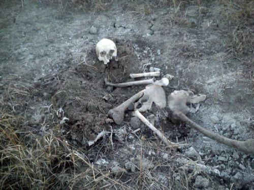 Koyun otlatan çoban, insan iskeleti buldu