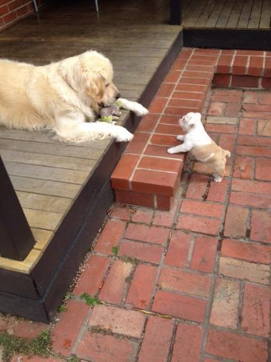 Efsaneleşen hayvan karşılaşmaları