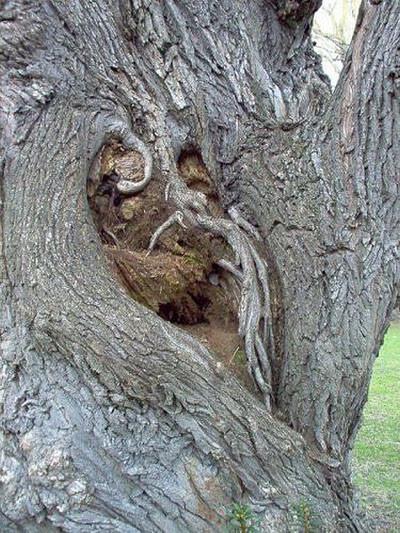 Bu ağaçlar korkutuyor