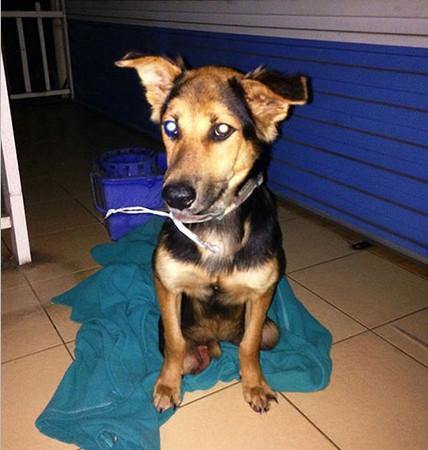 Felçli köpek Leo'nun hayata tutunma mücadelesi