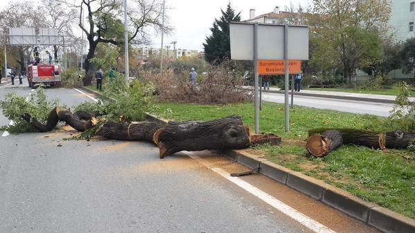 Yalova'da ağaç katliamı