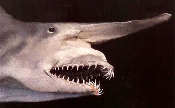 İşte dünyanın en tuhaf köpekbalıkları