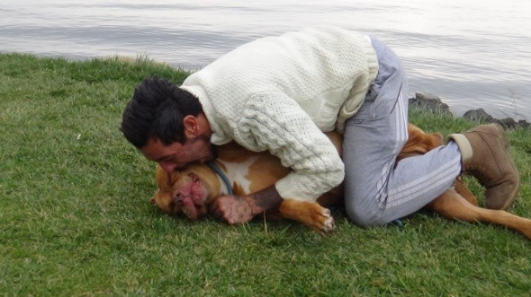 Tehlikeli değil deyip köpeğini ısırdı!