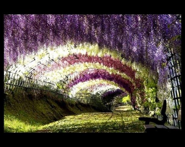 Mutlaka görmeniz gereken 10 ağaç tüneli!
