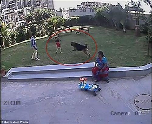 Köpek bir anda çocuğa saldırdı
