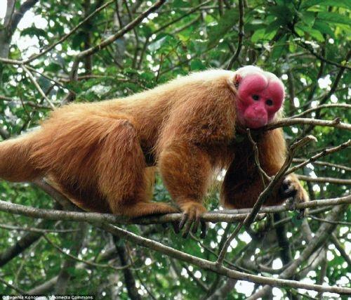 Dünyanın en çirkin hayvanları