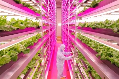 Japonlar tarımda devrim yarattı