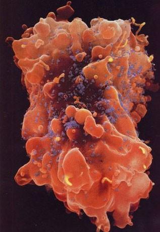 Bağışıklık sistemimizi gösteren inanılmaz kareler