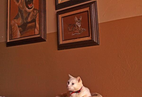 Kaliforniya'daki bu 'Kedi Cenneti'nde 700 kedi yaşıyor