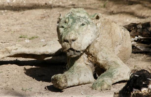 Dünyanın en korkunç hayvanat bahçesi