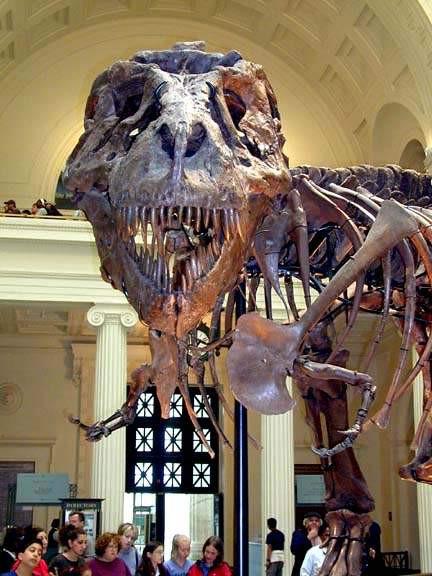 Tarihin en büyük yırtıcısı T-Rex